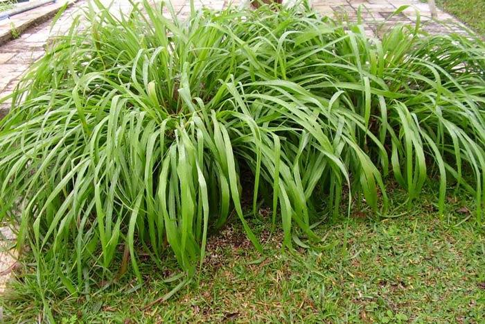 Blog de enchufix 11 tipos de plantas para ahuyentar los for Plantas de exterior que no necesitan sol