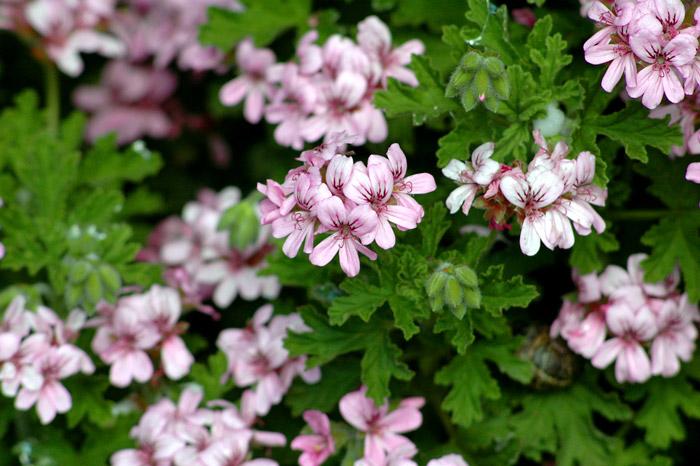 Blog de enchufix 11 tipos de plantas para ahuyentar los - Plantas ahuyenta insectos ...